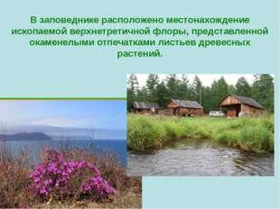 В заповеднике расположено местонахождение ископаемой верхнетретичной флоры, п