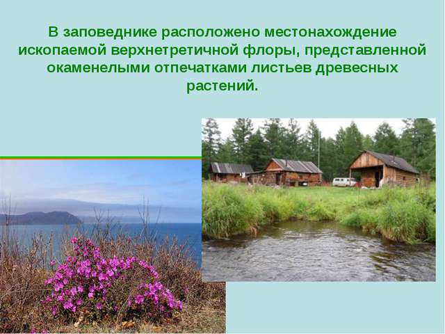 В заповеднике расположено местонахождение ископаемой верхнетретичной флоры, п...