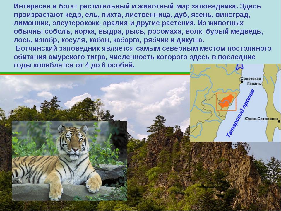 Интересен и богат растительный и животный мир заповедника. Здесь произрастают...