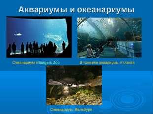 Аквариумы и океанариумы В тоннеле аквариума. Атланта Океанариум в Burgers Zoo