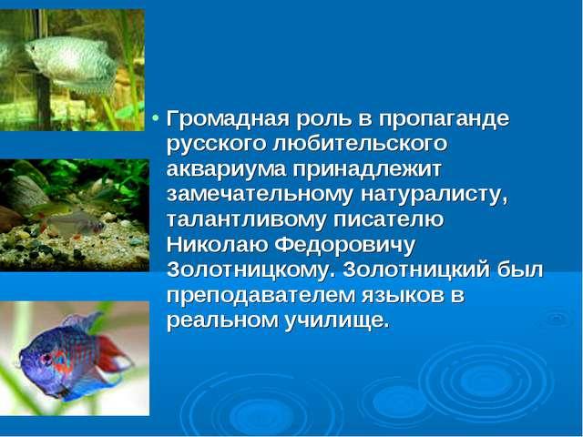 Громадная роль в пропаганде русского любительского аквариума принадлежит заме...