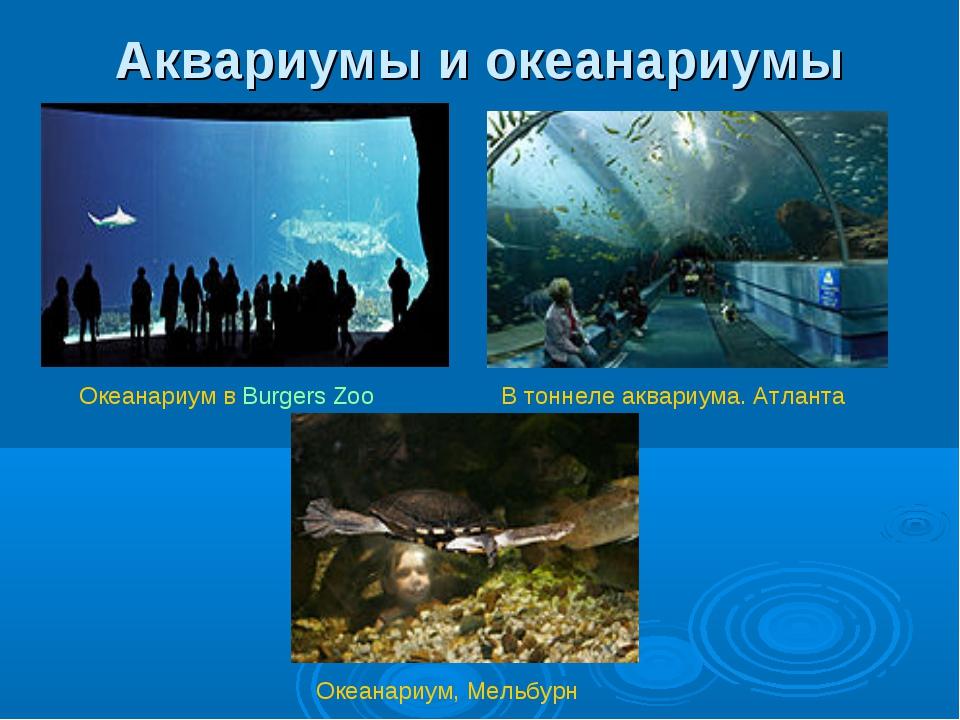 Аквариумы и океанариумы В тоннеле аквариума. Атланта Океанариум в Burgers Zoo...