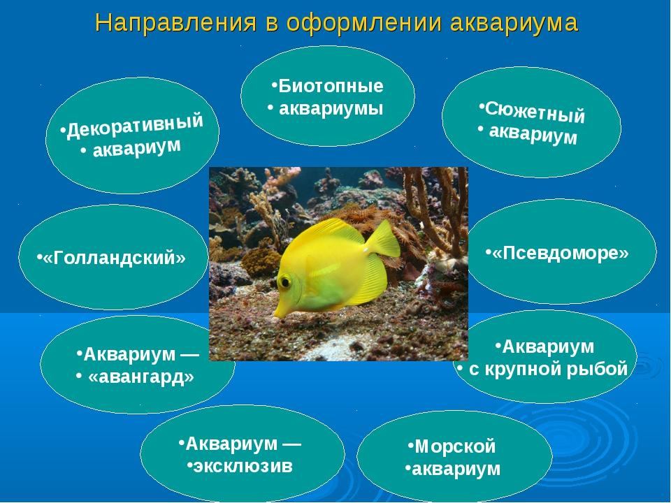 Направления в оформлении аквариума Декоративный аквариум «Голландский» Аквари...
