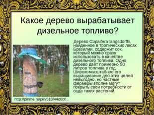 Какое дерево вырабатывает дизельное топливо? Дерево Copaifera langsdorffii, н