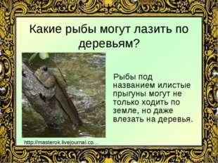 Какие рыбы могут лазить по деревьям? Рыбы под названием илистые прыгуны могут
