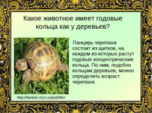 Какое животное имеет годовые кольца как у деревьев? Панцирь черепахи состоит
