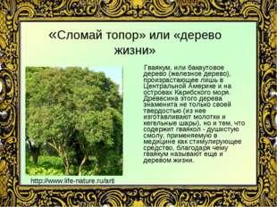 «Сломай топор» или «дерево жизни» Гваякум, или бакаутовое дерево (железное де