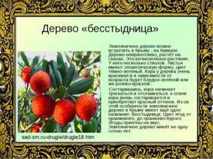 Дерево «бесстыдница» Земляничное дерево можно встретить в Крыму , на Кавказе.