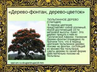 «Дерево-фонтан, дерево-цветок» ТЮЛЬПАННОЕ ДЕРЕВО (Спатодея) В период цветения