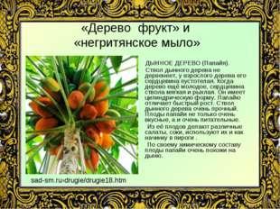 «Дерево фрукт» и «негритянское мыло» ДЫННОЕ ДЕРЕВО (Папайя). Ствол дынного де