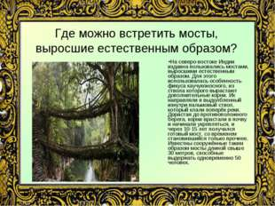 Где можно встретить мосты, выросшие естественным образом? На северо-востоке И
