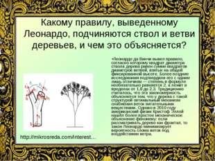 Какому правилу, выведенному Леонардо, подчиняются ствол и ветви деревьев, и ч