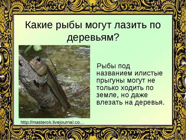 Какие рыбы могут лазить по деревьям? Рыбы под названием илистые прыгуны могут...