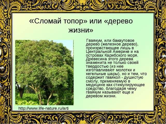 «Сломай топор» или «дерево жизни» Гваякум, или бакаутовое дерево (железное де...