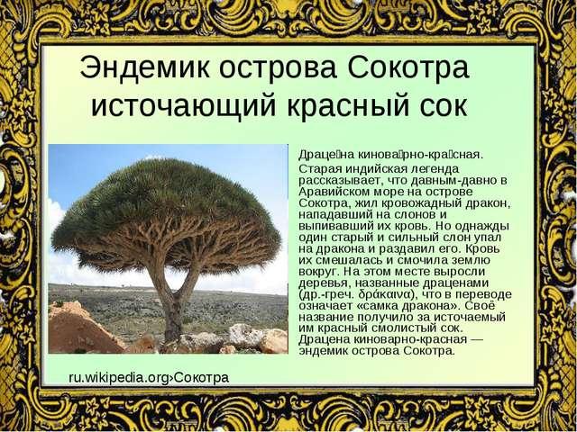 Эндемик острова Сокотра источающий красный сок Драце́на кинова́рно-кра́сная....