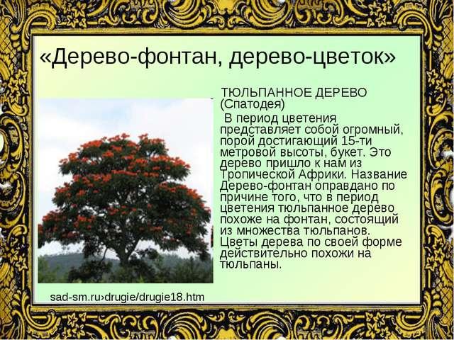 «Дерево-фонтан, дерево-цветок» ТЮЛЬПАННОЕ ДЕРЕВО (Спатодея) В период цветения...