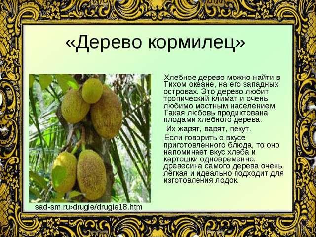 «Дерево кормилец» Хлебное дерево можно найти в Тихом океане, на его западных...