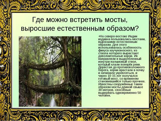 Где можно встретить мосты, выросшие естественным образом? На северо-востоке И...