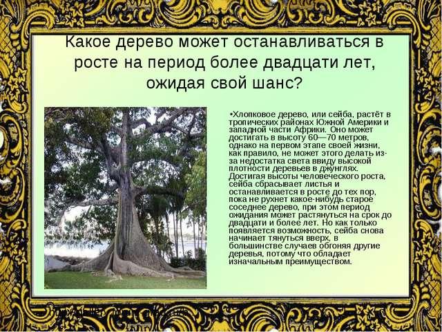 Какое дерево может останавливаться в росте на период более двадцати лет, ожид...