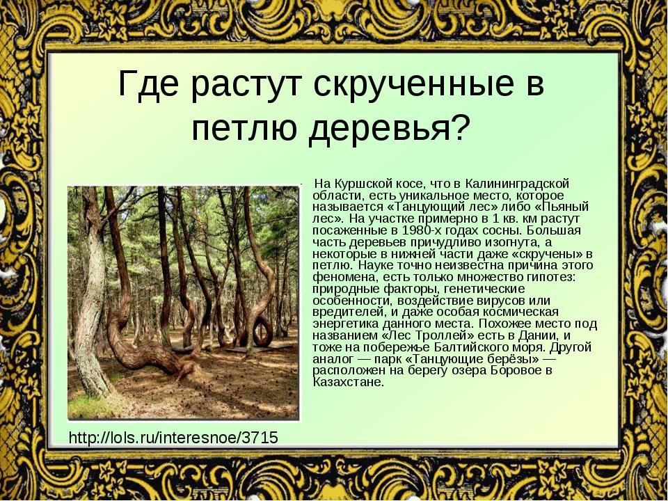 Где растут скрученные в петлю деревья? На Куршской косе, что в Калининградско...