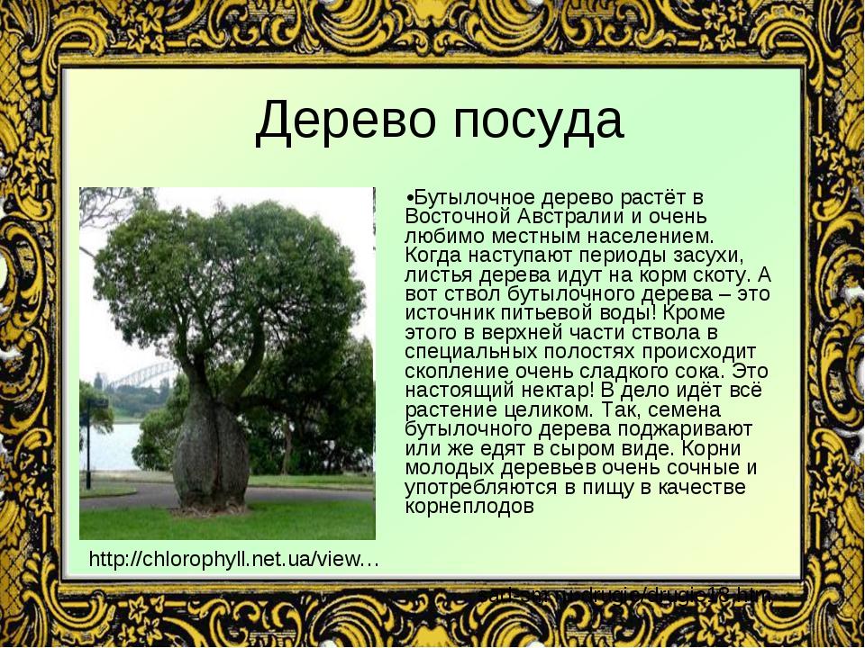 Дерево посуда Бутылочное дерево растёт в Восточной Австралии и очень любимо м...