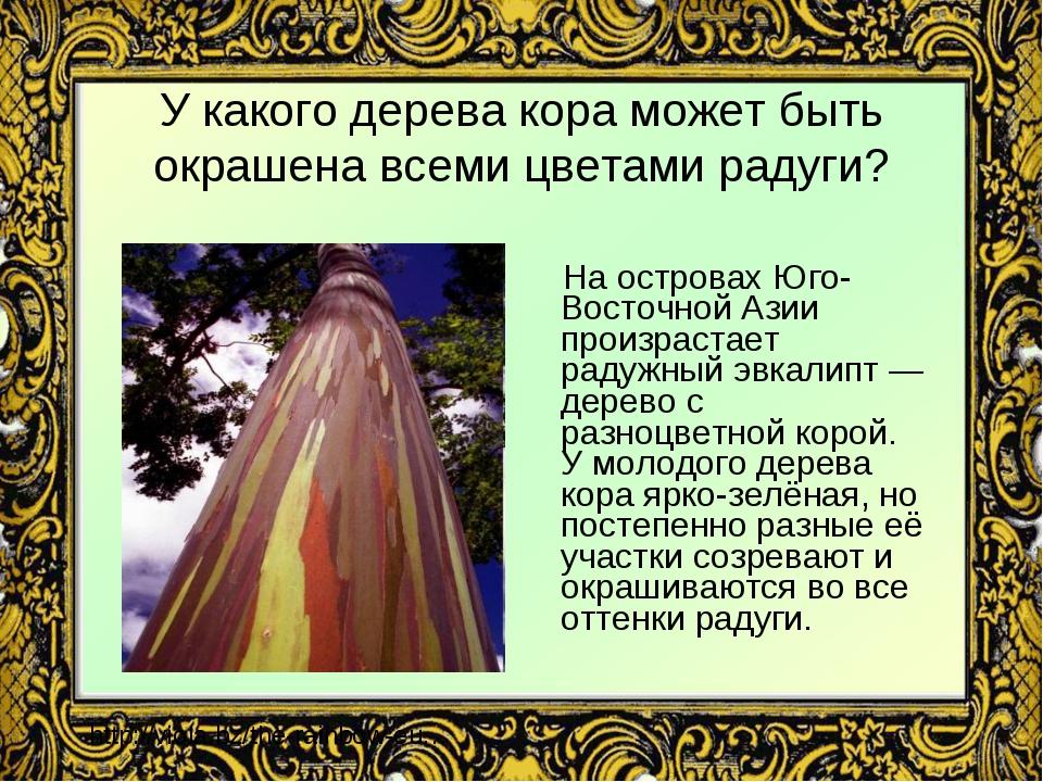 У какого дерева кора может быть окрашена всеми цветами радуги? На островах Юг...
