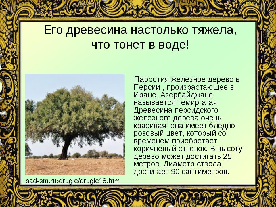 Его древесина настолько тяжела, что тонет в воде! Парротия-железное дерево в...