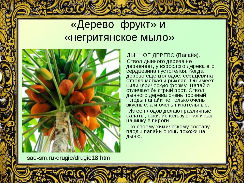 «Дерево фрукт» и «негритянское мыло» ДЫННОЕ ДЕРЕВО (Папайя). Ствол дынного де...