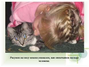 Рисунок на носу кошки уникален, как отпечаток пальца человека.