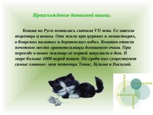 Происхождение домашней кошки. Кошка на Руси появилась сначала VII века. Ее з