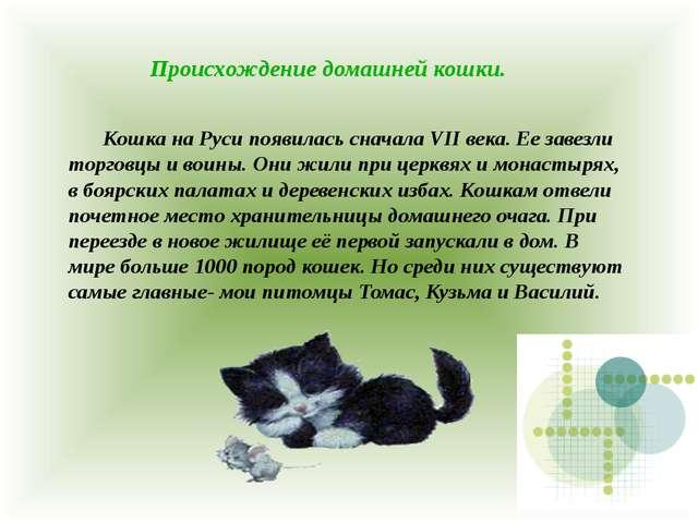 Происхождение домашней кошки. Кошка на Руси появилась сначала VII века. Ее з...