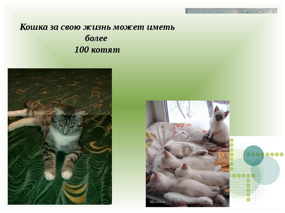Кошка за свою жизнь может иметь более 100 котят