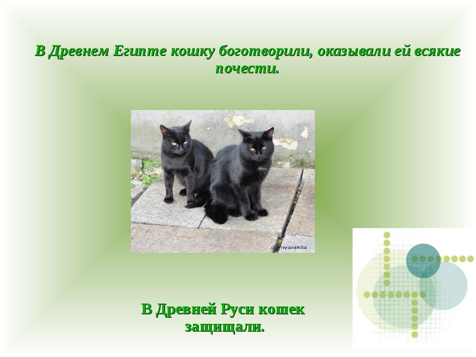 В Древнем Египте кошку боготворили, оказывали ей всякие почести. В Древней Ру...