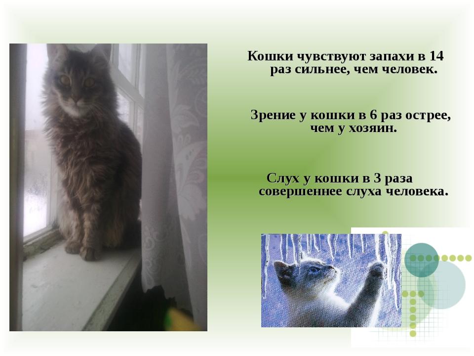 Кошки чувствуют запахи в 14 раз сильнее, чем человек. Зрение у кошки в 6 раз...