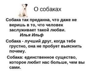 О собаках Собака так преданна, что даже не веришь в то, что человек заслужива