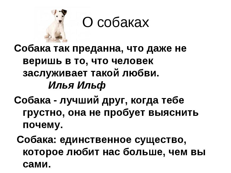 О собаках Собака так преданна, что даже не веришь в то, что человек заслужива...