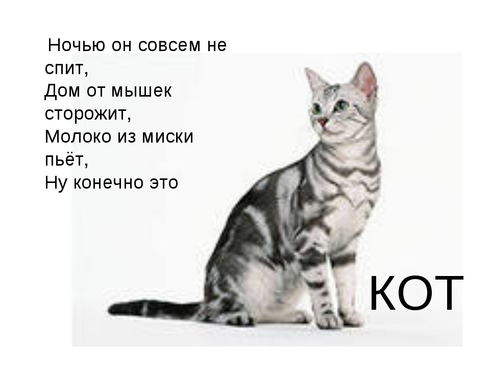 КОТ Ночью он совсем не спит, Дом от мышек сторожит, Молоко из миски пьёт,...