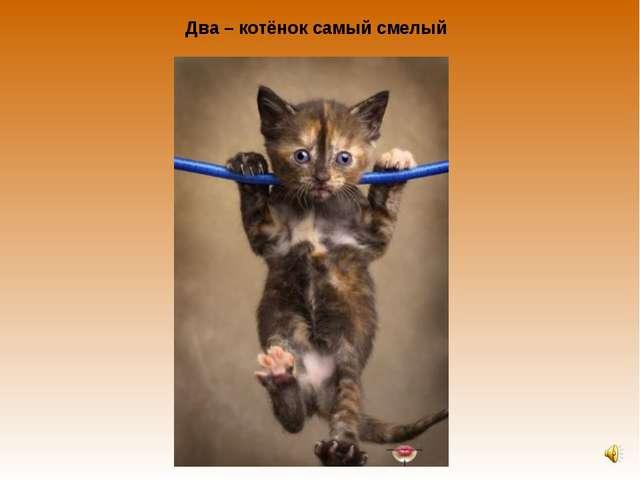 Два – котёнок самый смелый