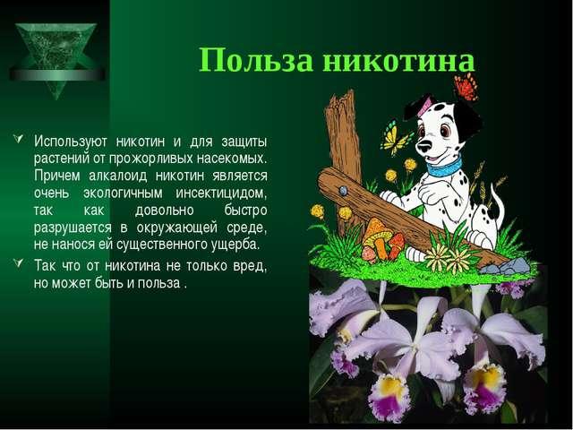 Польза никотина Используют никотин и для защиты растений от прожорливых насек...