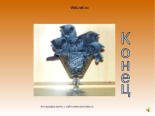 Viki.rdf.ru Фотографии взяты с сайта www.vkontakte.ru