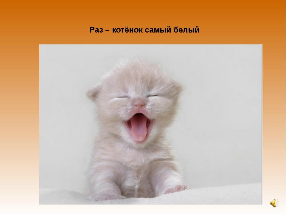 Раз – котёнок самый белый