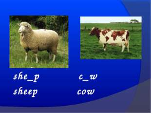 she_p c_w sheep cow