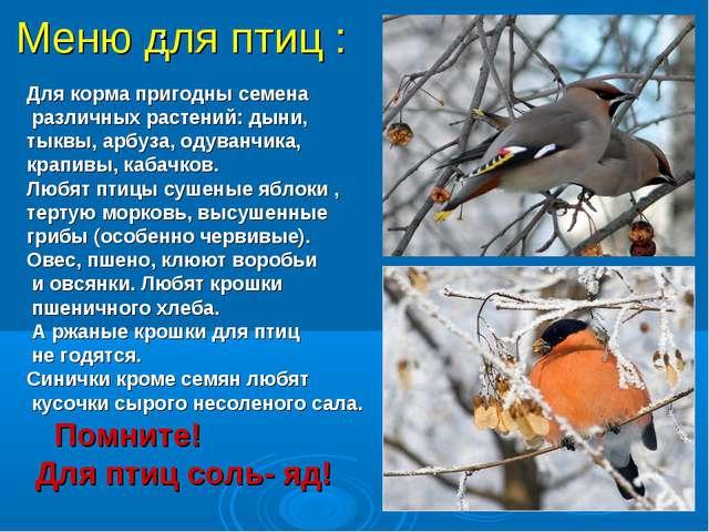 Меню для птиц : Для корма пригодны семена различных растений: дыни, тыквы, ар...