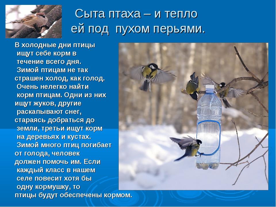 Сыта птаха – и тепло ей под пухом перьями. В холодные дни птицы ищут себе кор...