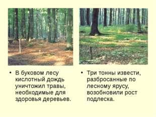 В буковом лесу кислотный дождь уничтожил травы, необходимые для здоровья дер