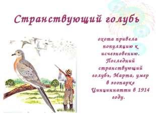 Странствующий голубь охота привела популяцию к исчезновению. Последний странс