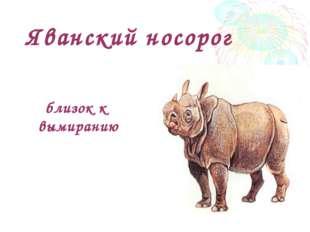 Яванский носорог близок к вымиранию