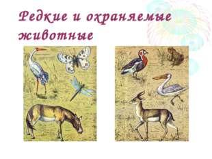 Редкие и охраняемые животные