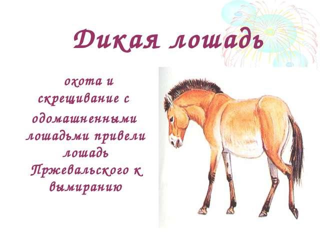 Дикая лошадь охота и скрещивание с одомашненными лошадьми привели лошадь Прж...