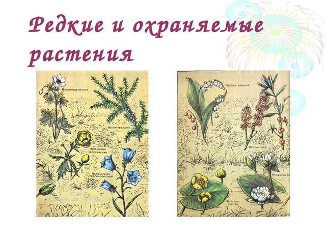 Редкие и охраняемые растения